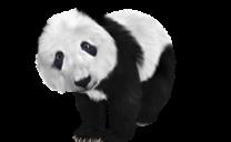 低品質なサイトを検索結果上位から除外するパンダアップデート