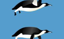 ブラックハットSEOを駆逐する「ペンギンアップデート」とは